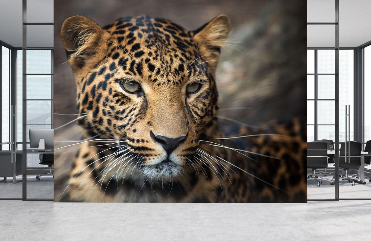 luipaarden Close-up van een luipaard 3