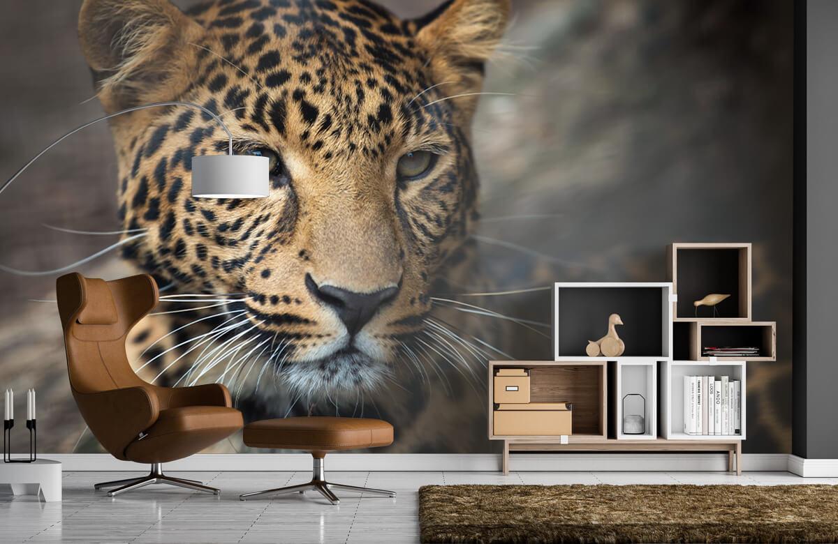 luipaarden Close-up van een luipaard 4