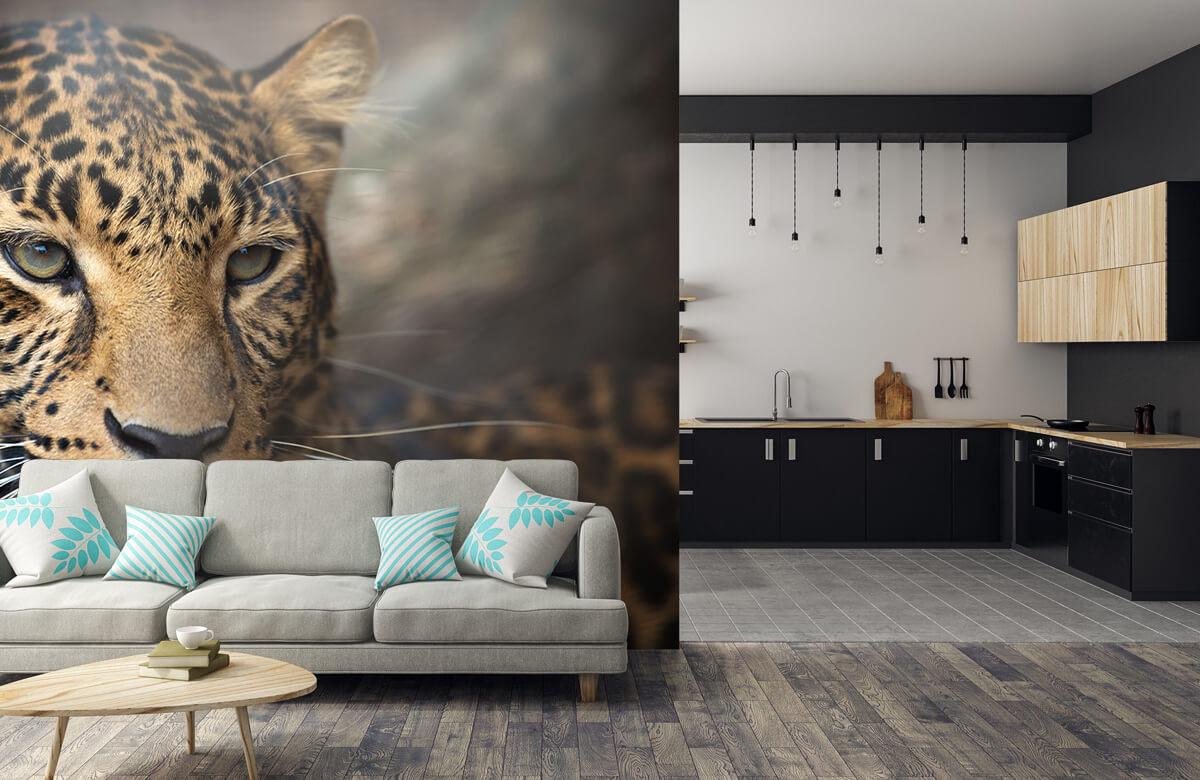 luipaarden Close-up van een luipaard 5