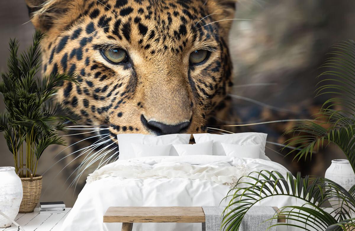 luipaarden Close-up van een luipaard 6