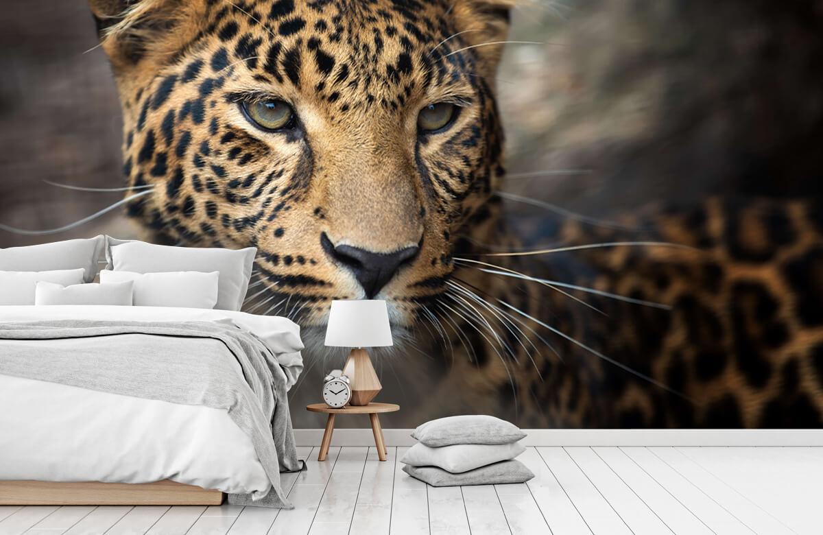 luipaarden Close-up van een luipaard 7