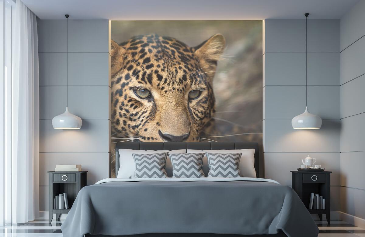 luipaarden Close-up van een luipaard 8