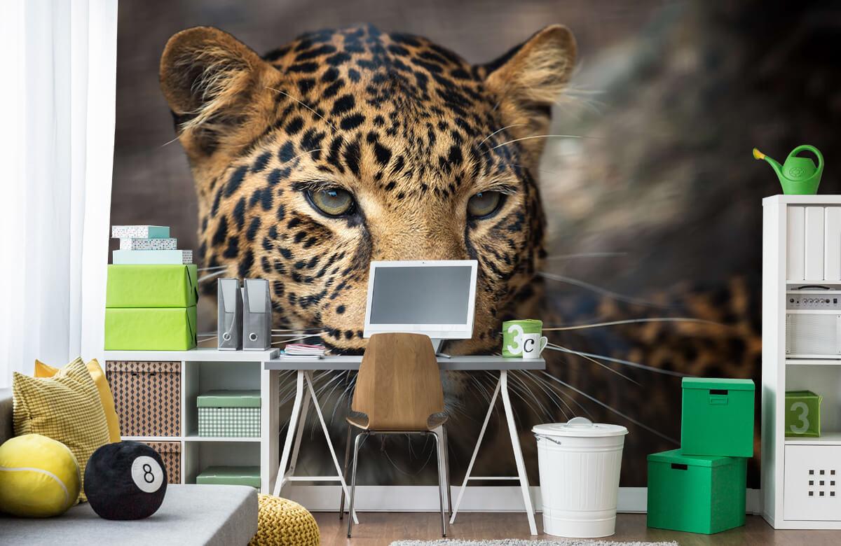 luipaarden Close-up van een luipaard 9