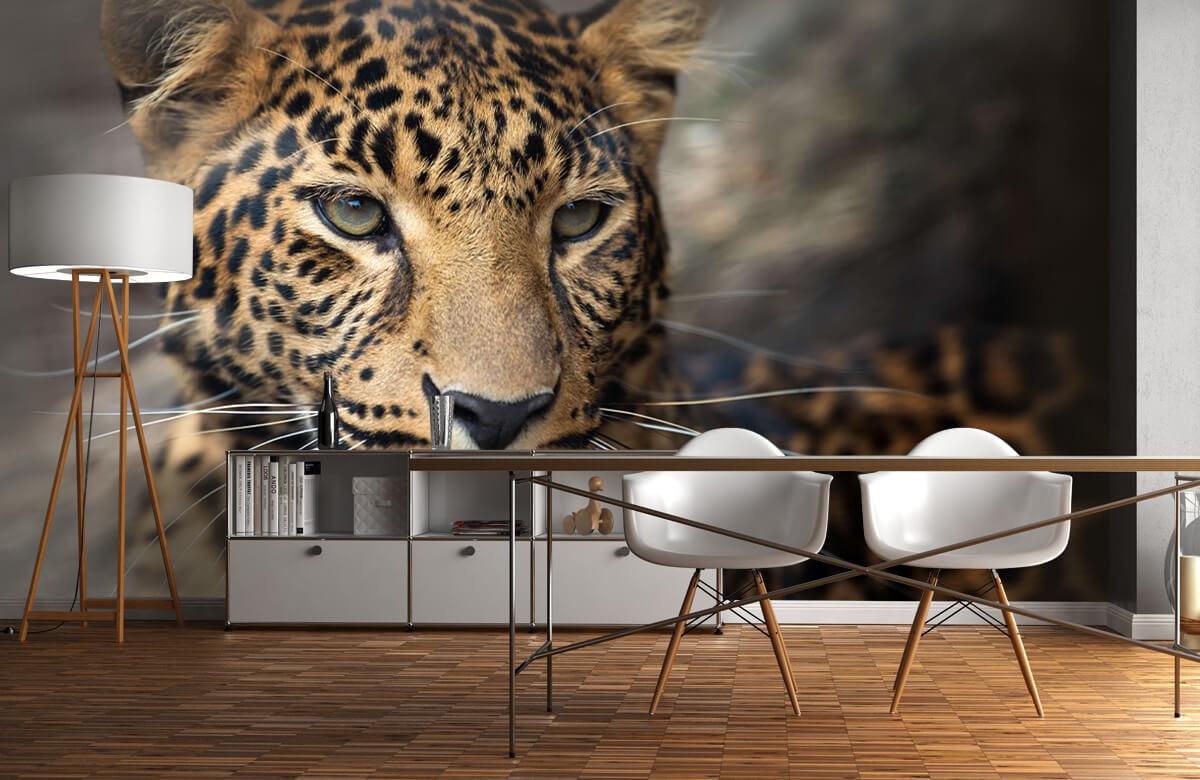luipaarden Close-up van een luipaard 11