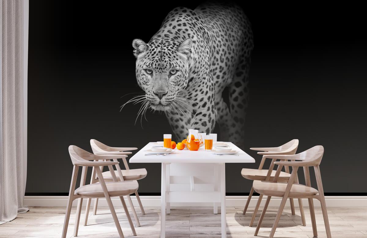 luipaarden Lopende luipaard op een zwarte achtergrond. 1