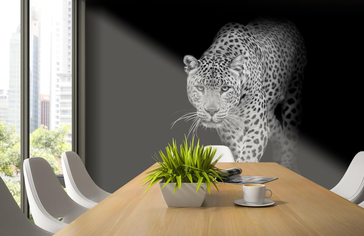 luipaarden Lopende luipaard op een zwarte achtergrond. 2