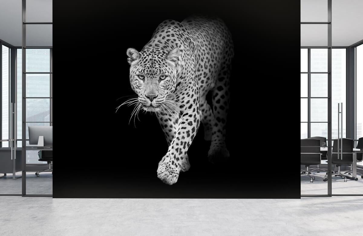 luipaarden Lopende luipaard op een zwarte achtergrond. 3