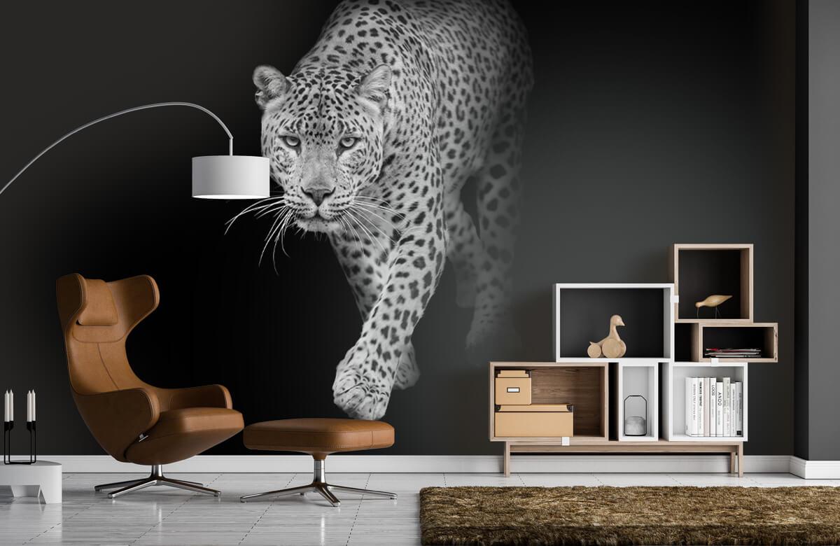 luipaarden Lopende luipaard op een zwarte achtergrond. 4