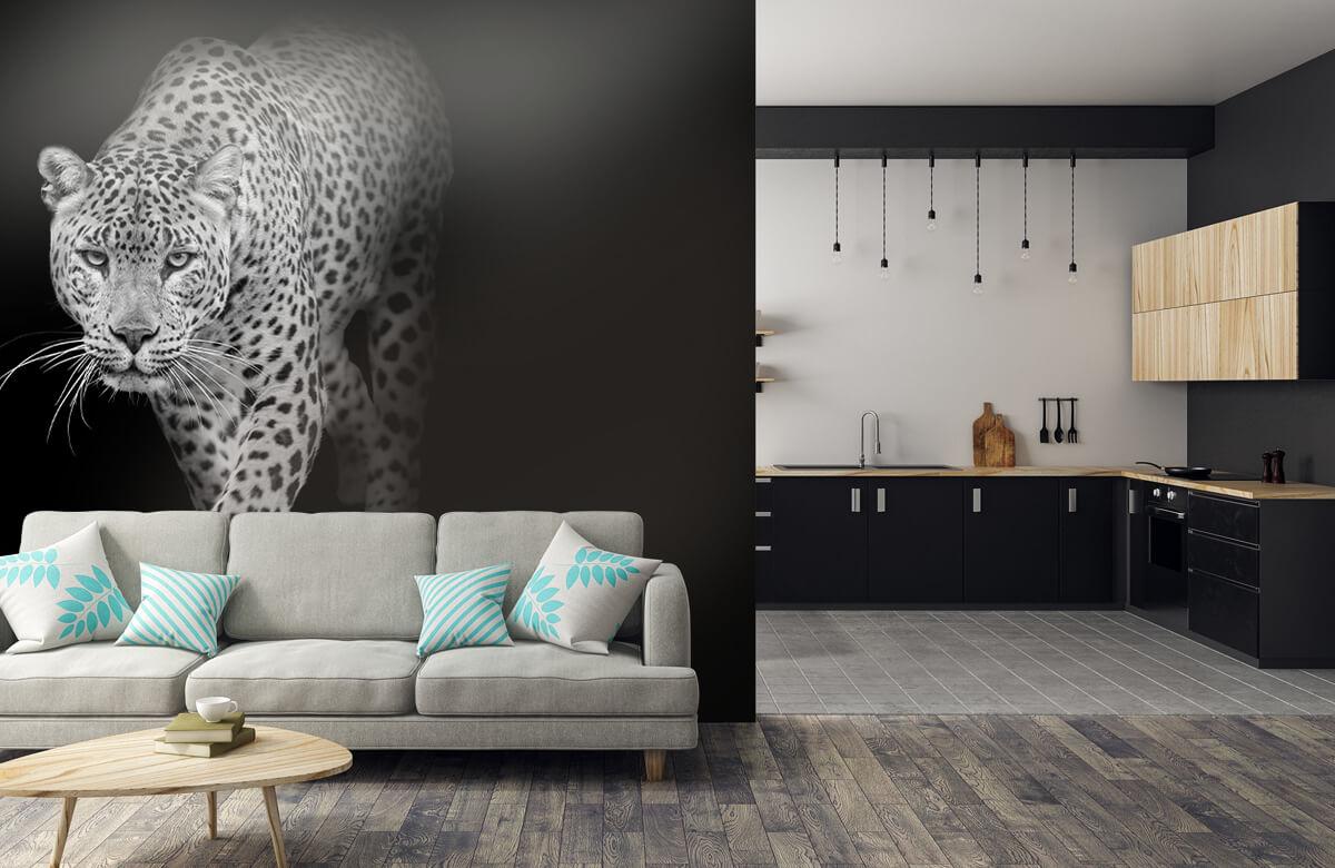 luipaarden Lopende luipaard op een zwarte achtergrond. 5