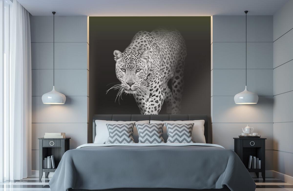 luipaarden Lopende luipaard op een zwarte achtergrond. 8