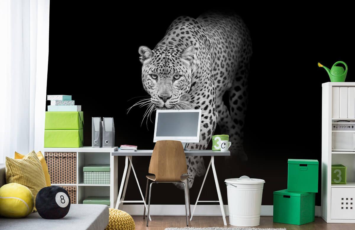 luipaarden Lopende luipaard op een zwarte achtergrond. 9