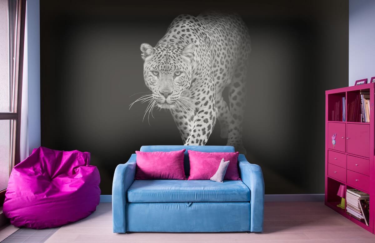 luipaarden Lopende luipaard op een zwarte achtergrond. 10