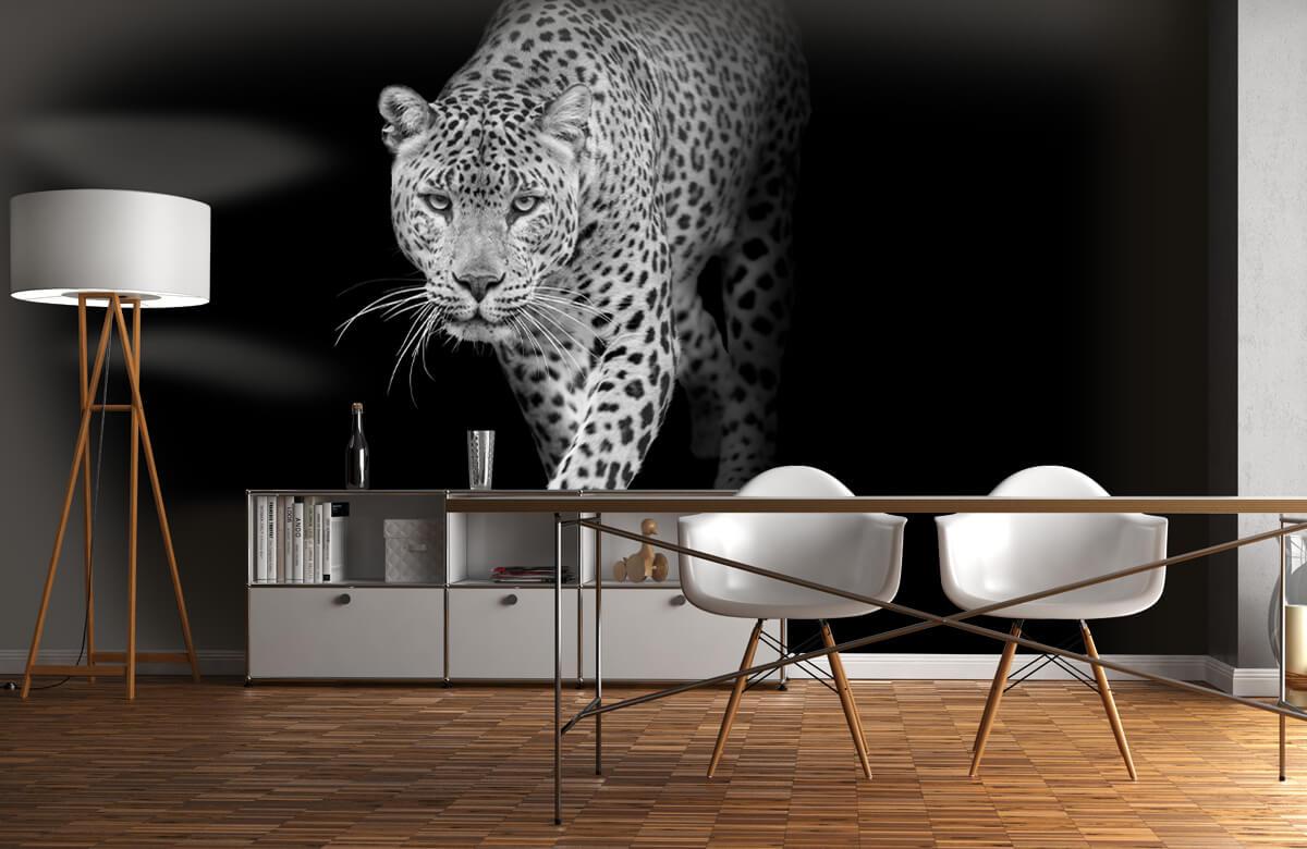 luipaarden Lopende luipaard op een zwarte achtergrond. 11