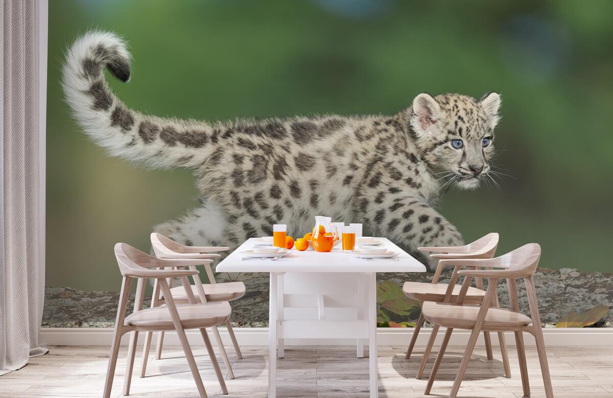 luipaarden Sneeuw luipaard welpje 2