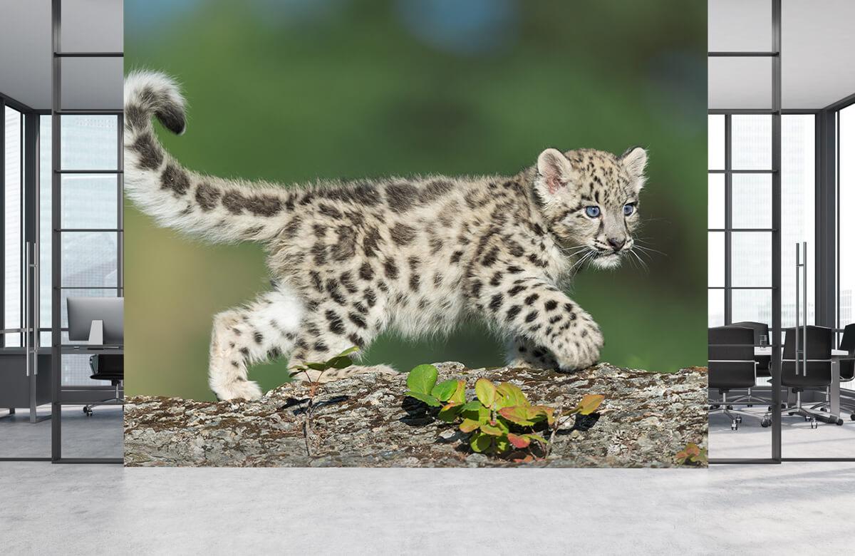 luipaarden Sneeuw luipaard welpje 4