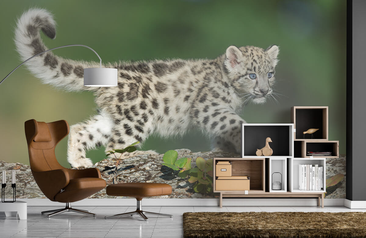 luipaarden Sneeuw luipaard welpje 5