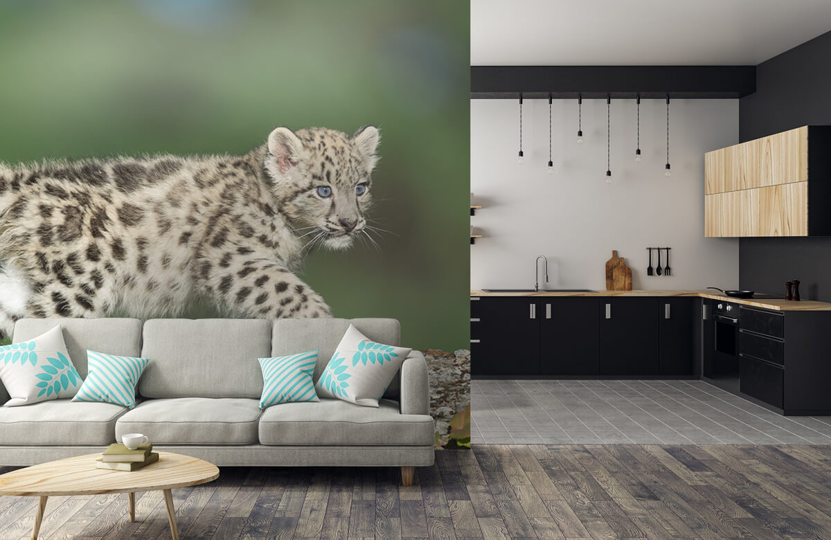 luipaarden Sneeuw luipaard welpje 1