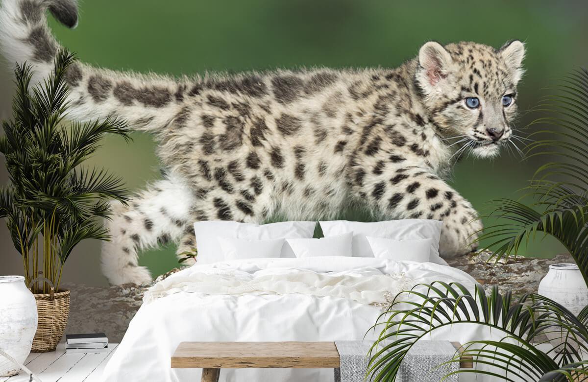 luipaarden Sneeuw luipaard welpje 6