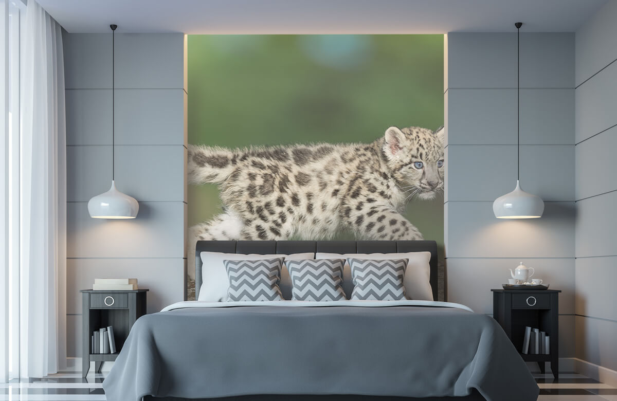 luipaarden Sneeuw luipaard welpje 8