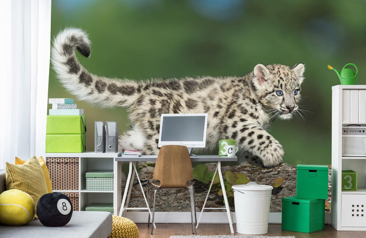 luipaarden Sneeuw luipaard welpje 9