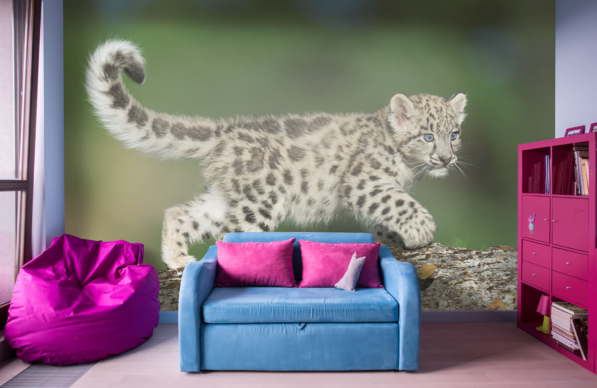 luipaarden Sneeuw luipaard welpje 10