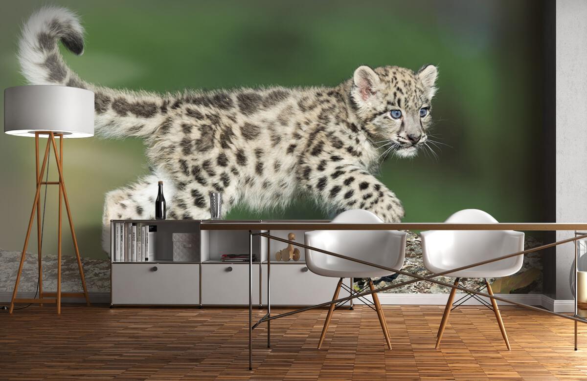 luipaarden Sneeuw luipaard welpje 11
