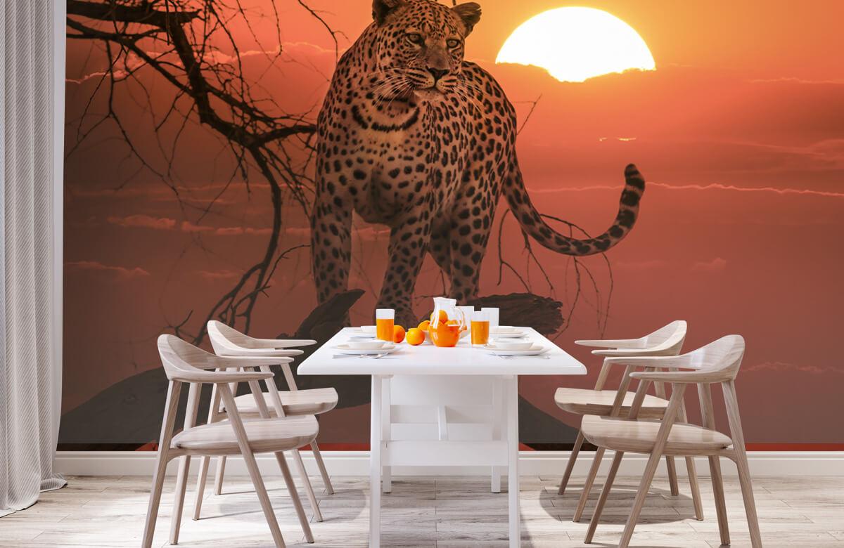 luipaarden Luipaard met ondergaande zon 1