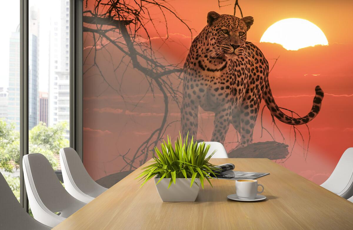 luipaarden Luipaard met ondergaande zon 2