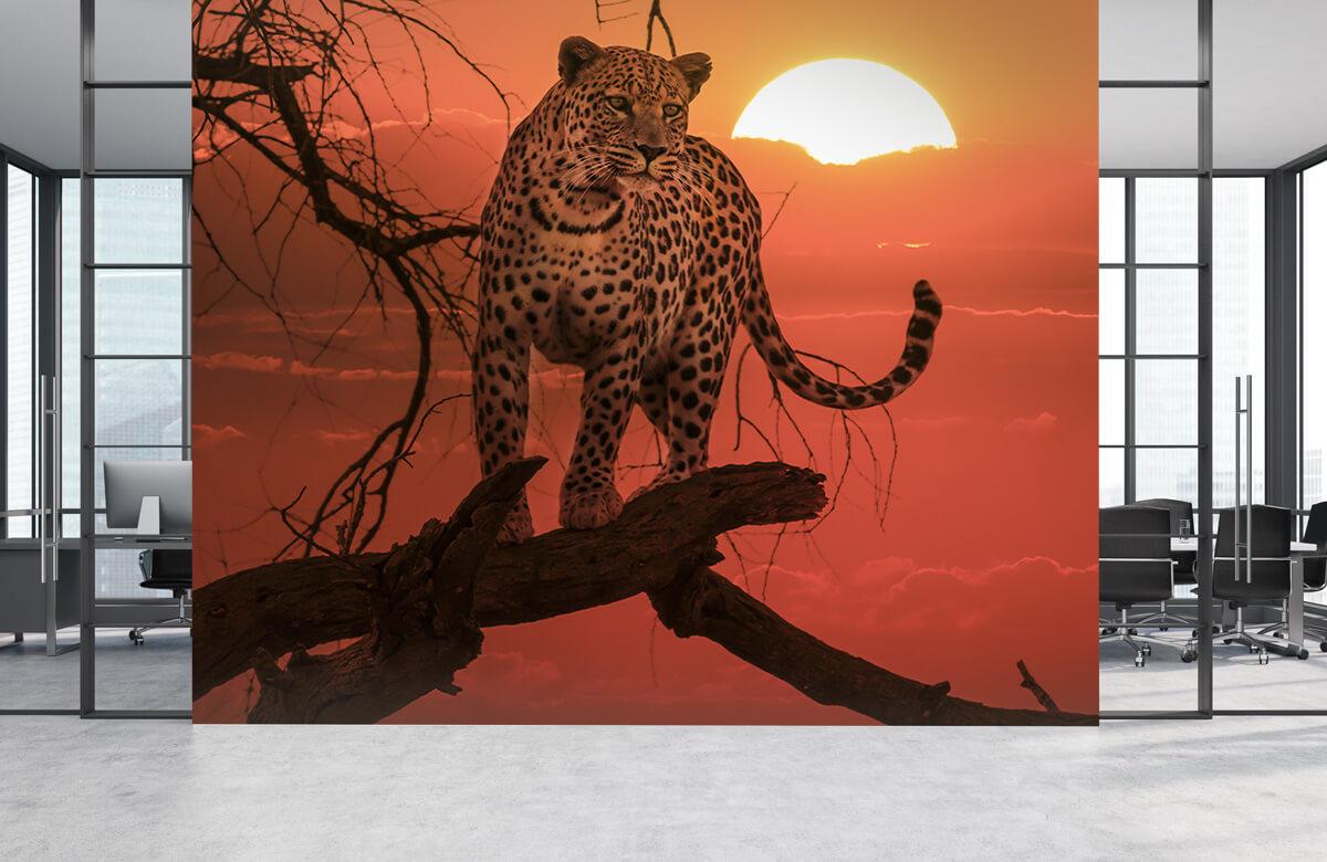 luipaarden Luipaard met ondergaande zon 3