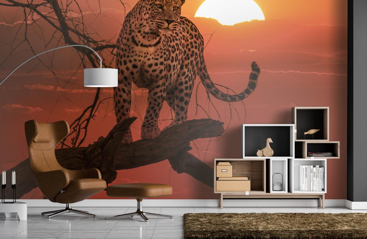 luipaarden Luipaard met ondergaande zon 4