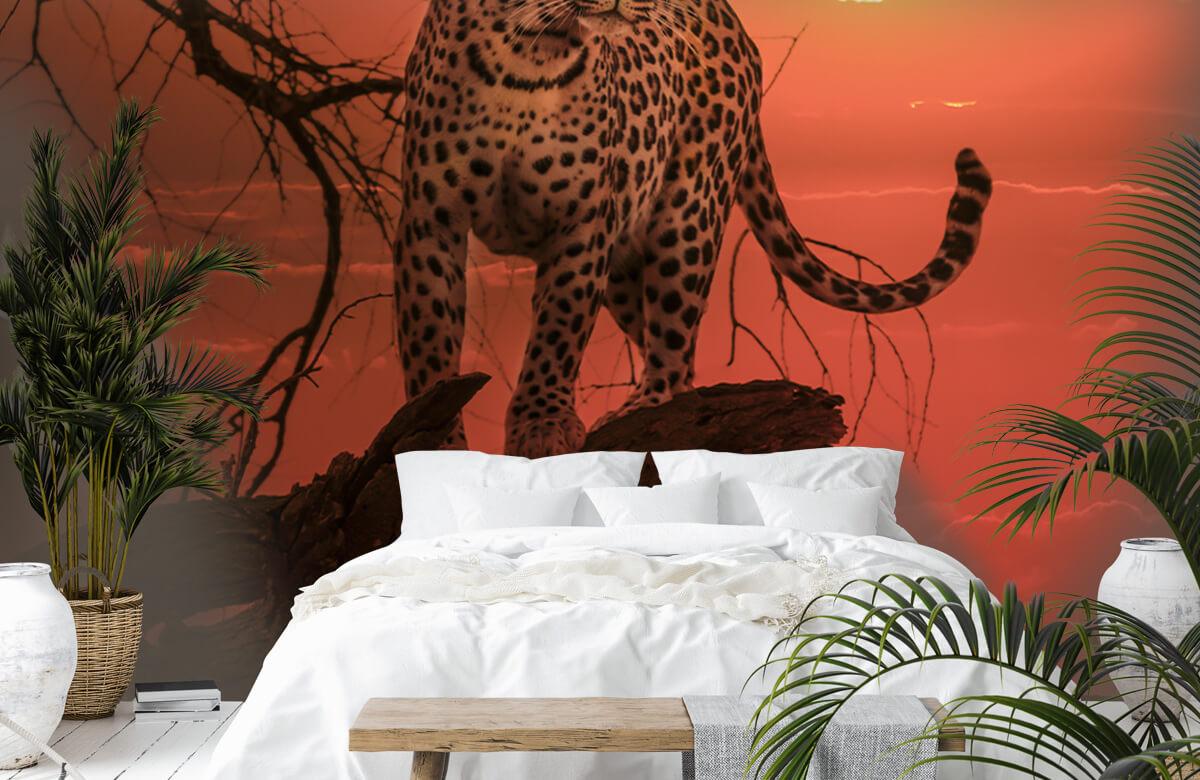 luipaarden Luipaard met ondergaande zon 6