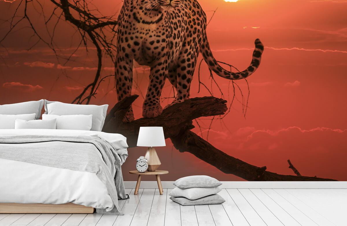luipaarden Luipaard met ondergaande zon 7