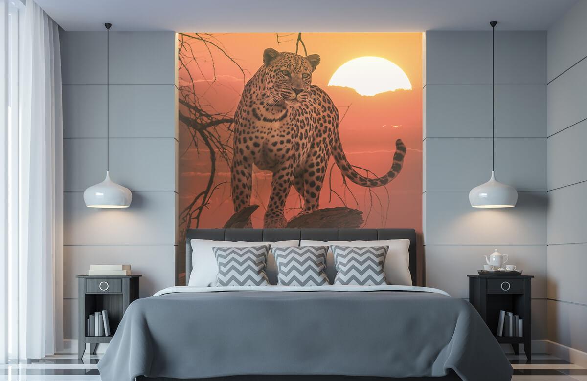 luipaarden Luipaard met ondergaande zon 8