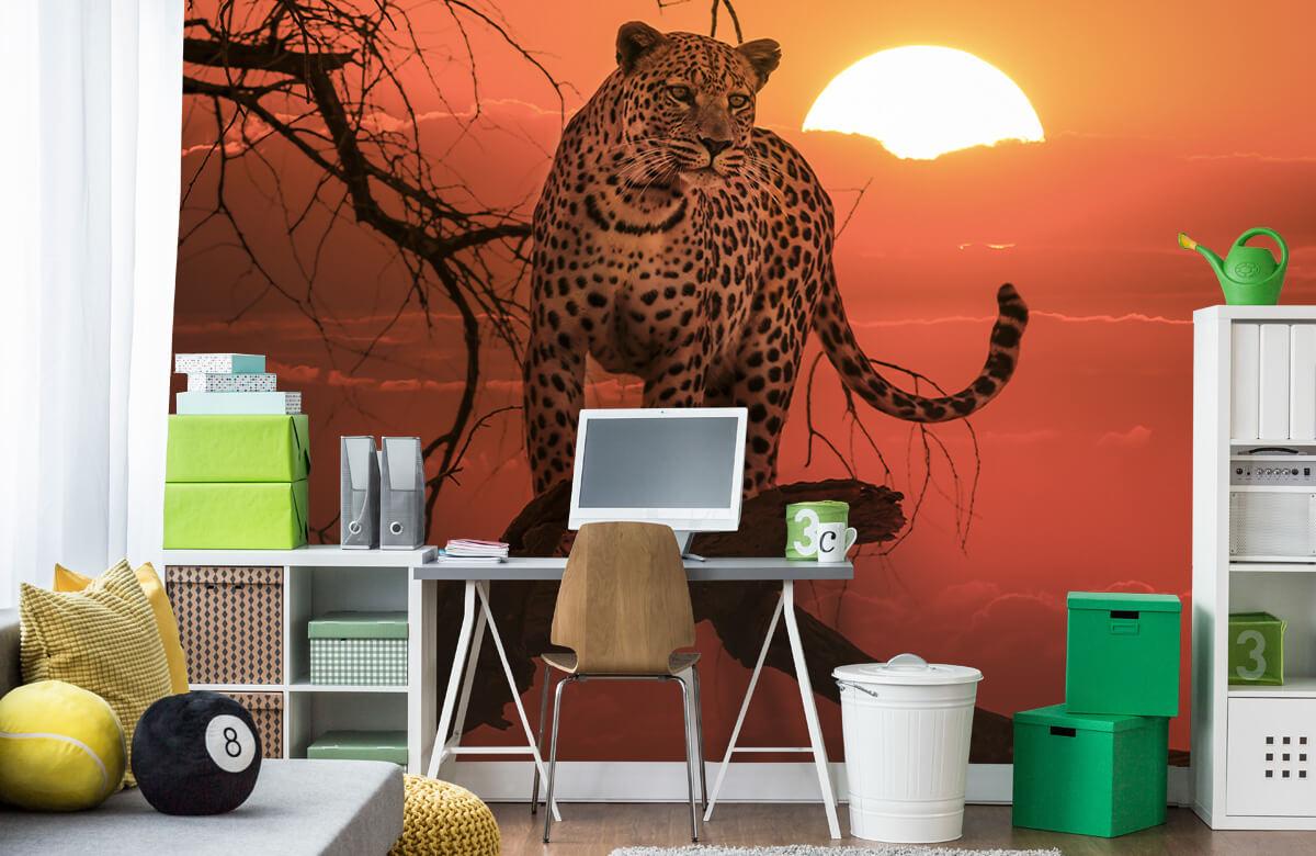 luipaarden Luipaard met ondergaande zon 9