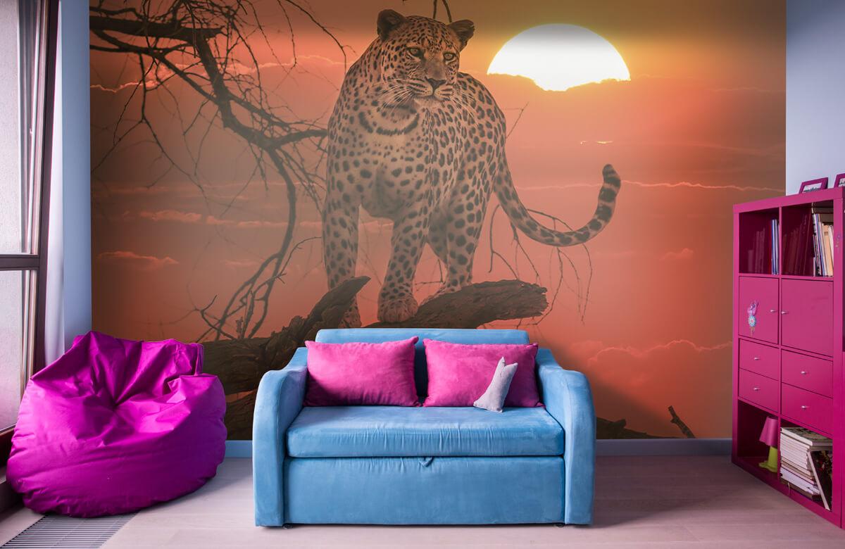 luipaarden Luipaard met ondergaande zon 10