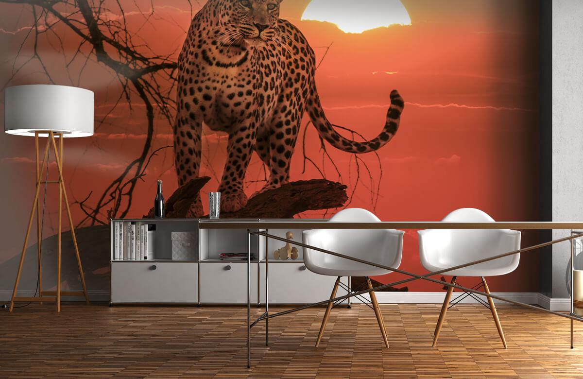 luipaarden Luipaard met ondergaande zon 11