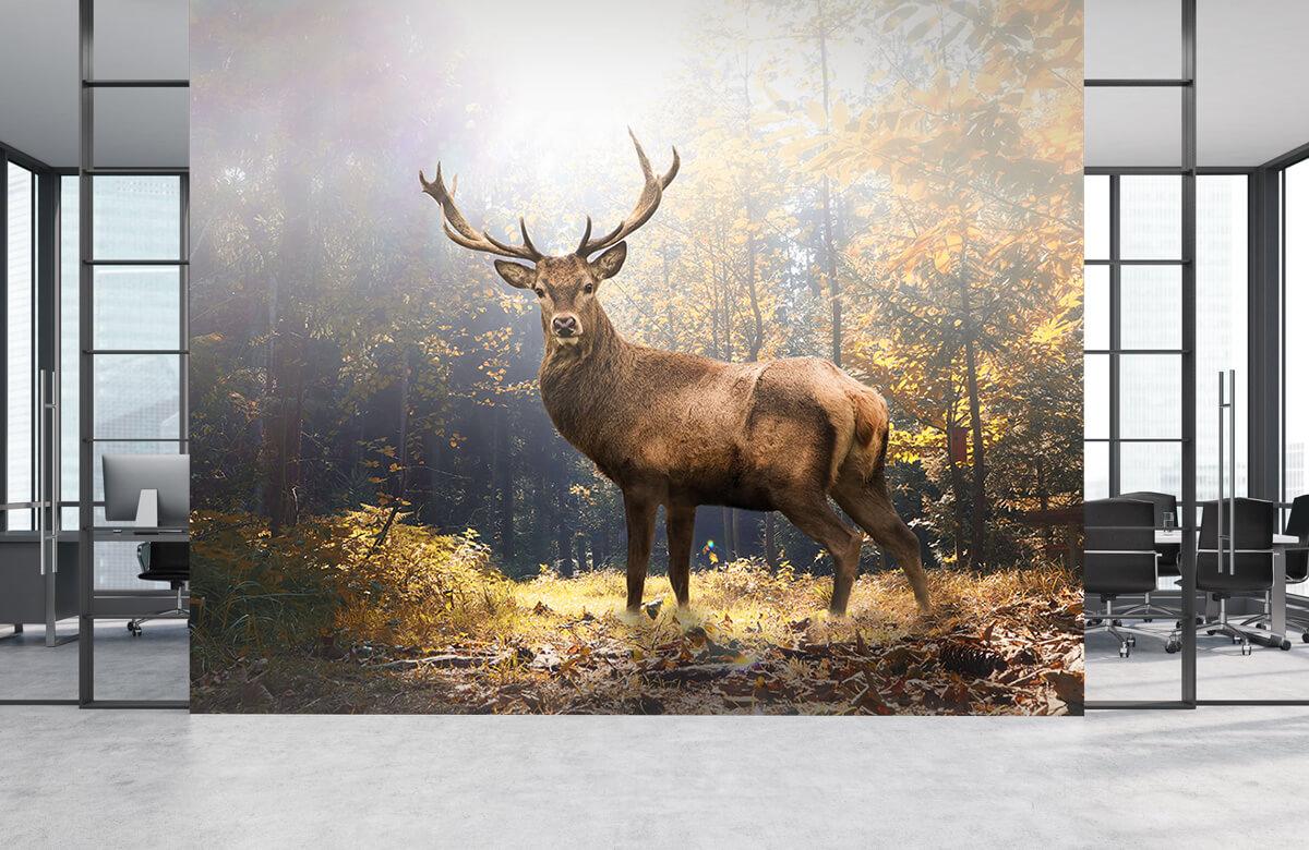 Dieren Hert in herfstbos 4