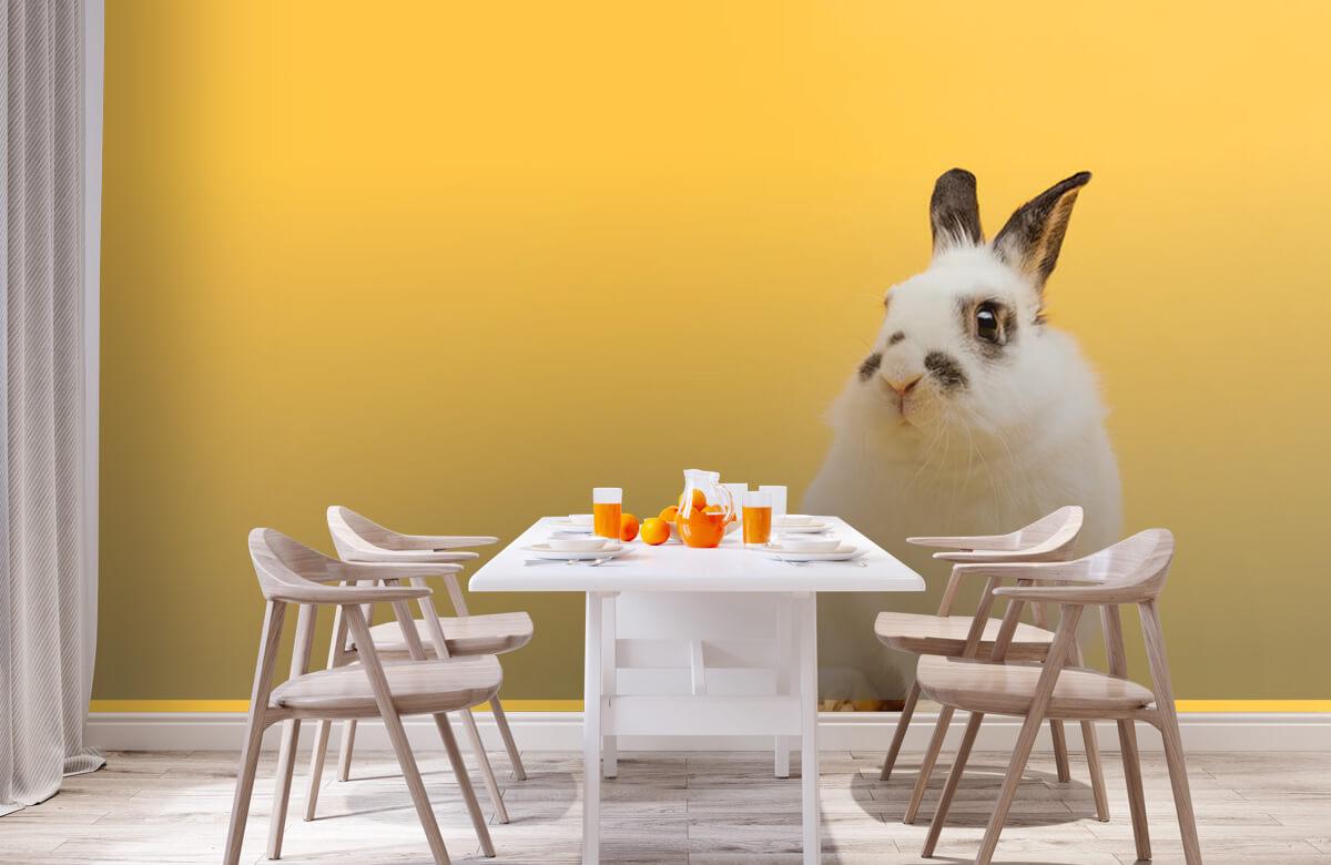 Dieren Poserend konijn 2