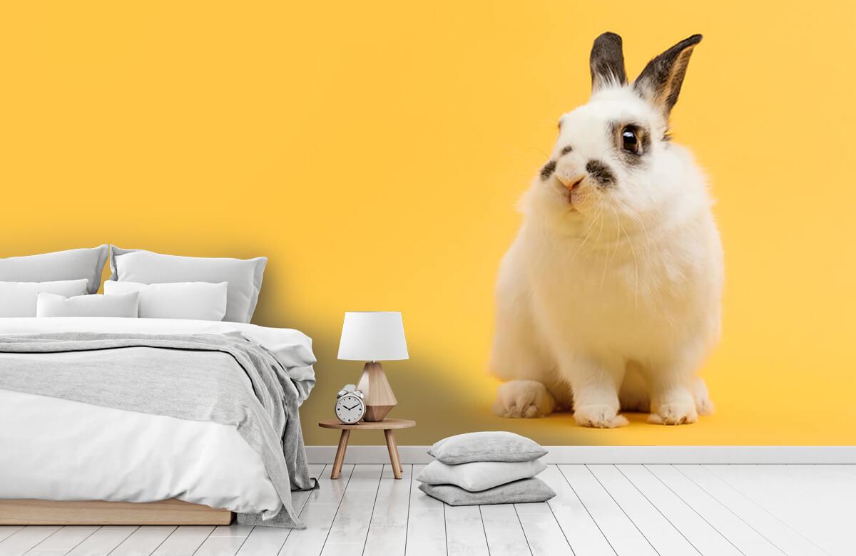 Dieren Poserend konijn 4