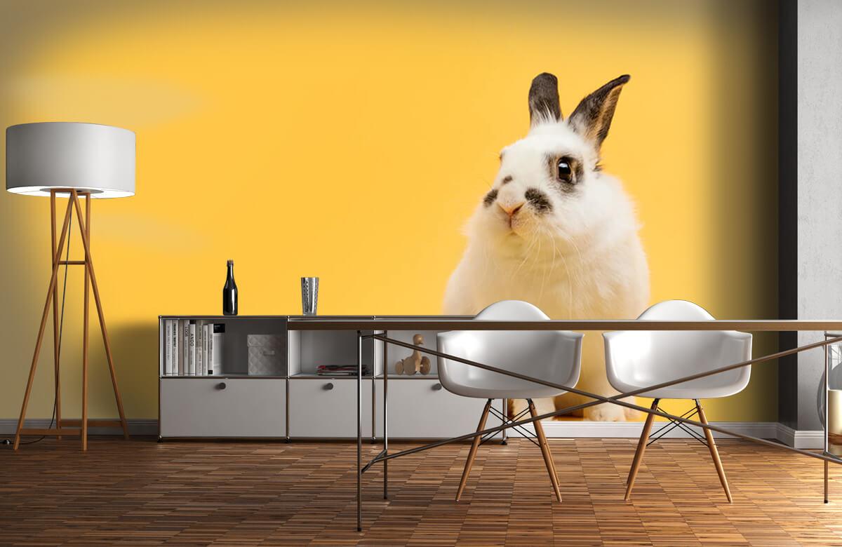 Dieren Poserend konijn 3