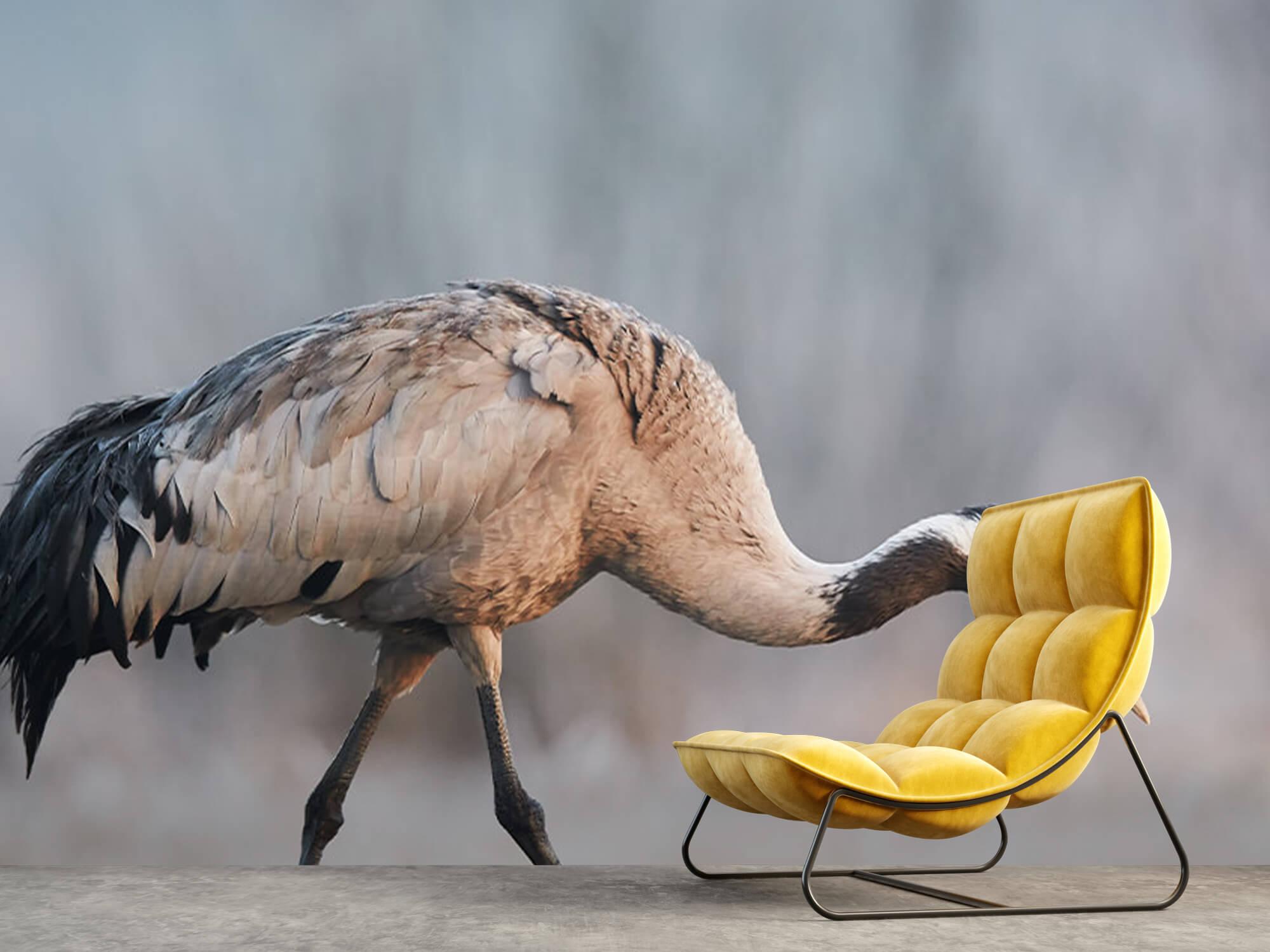 Kraanvogel in de ochtend 9