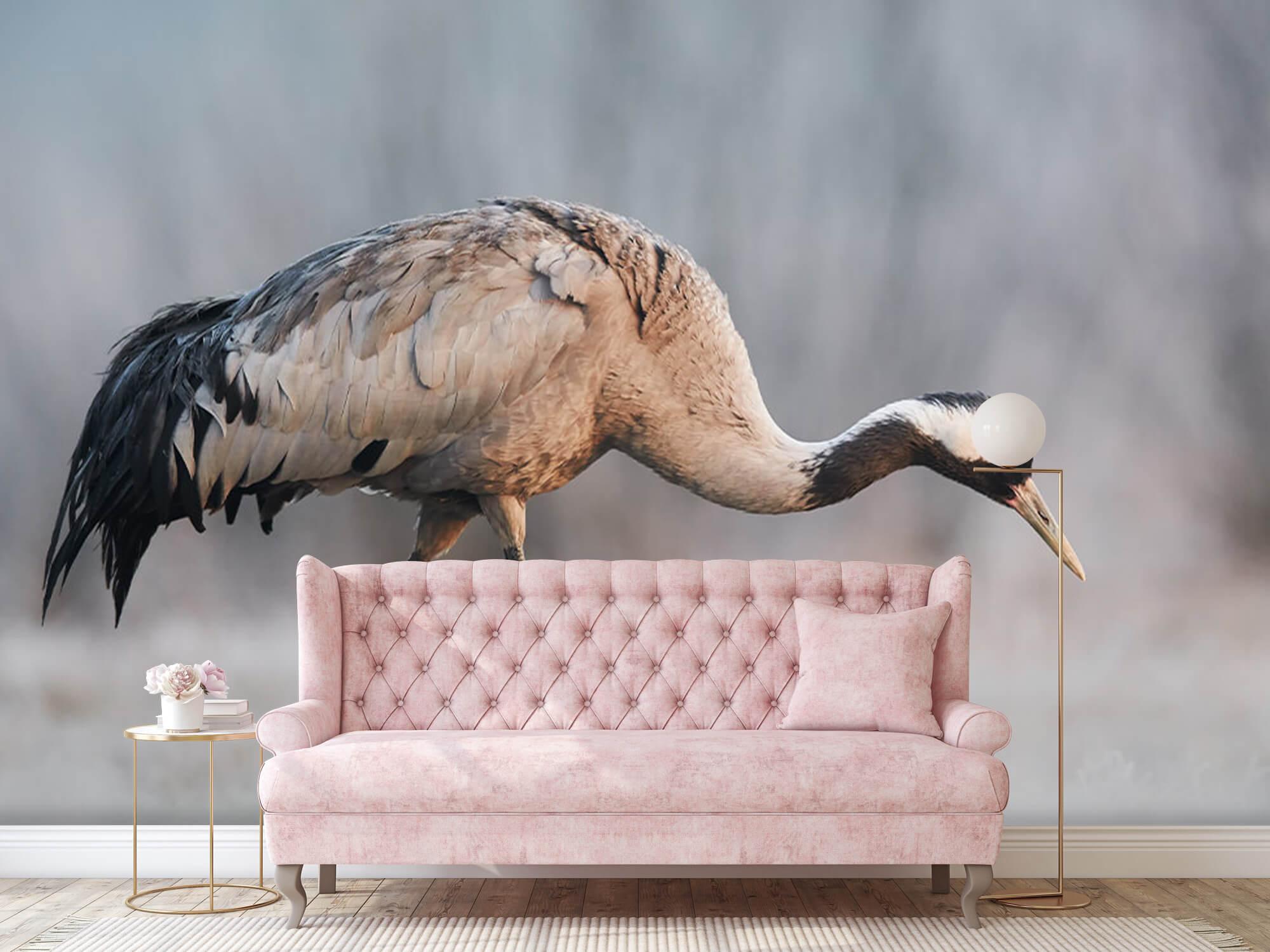 Kraanvogel in de ochtend 4
