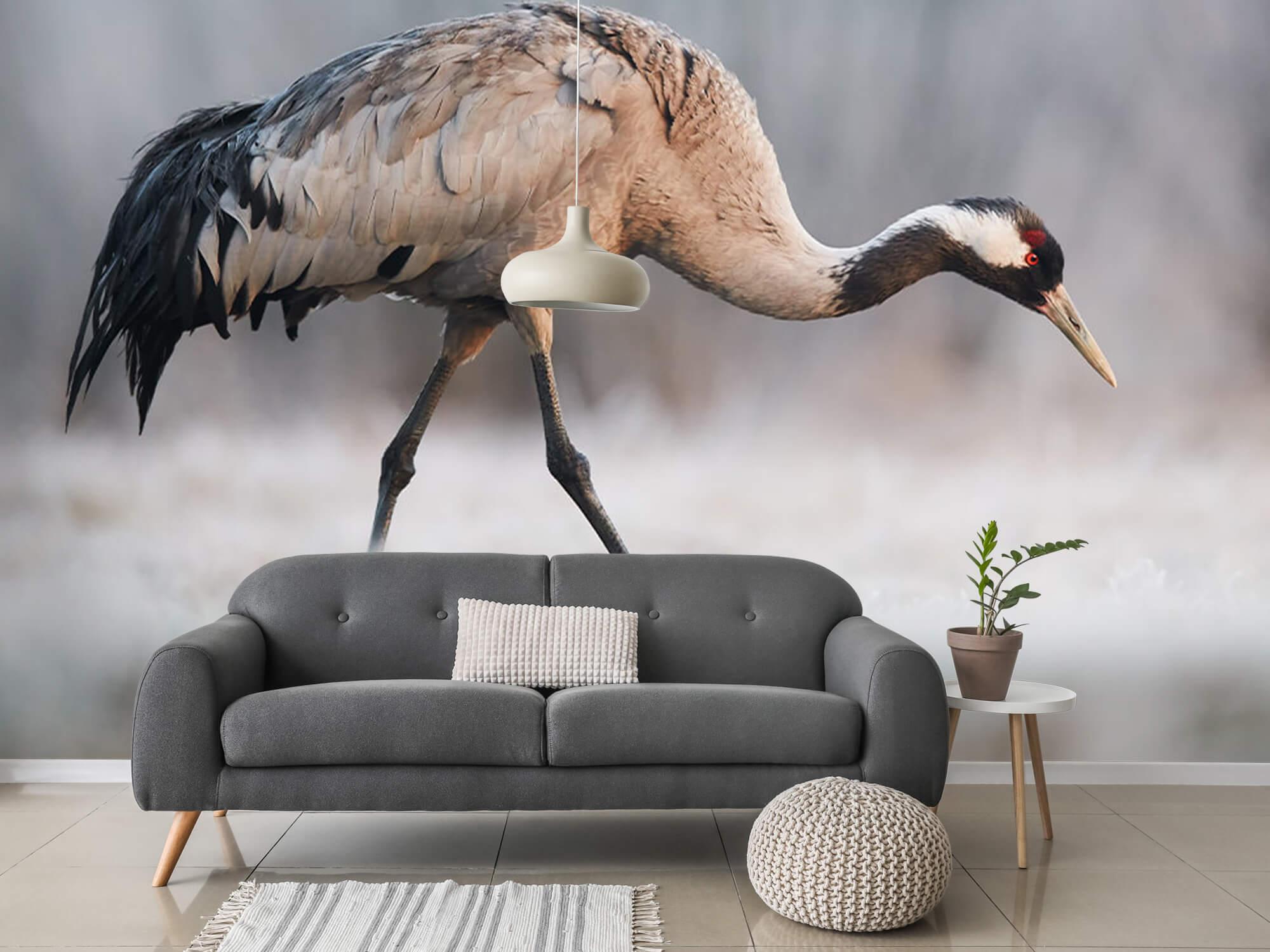 Kraanvogel in de ochtend 11