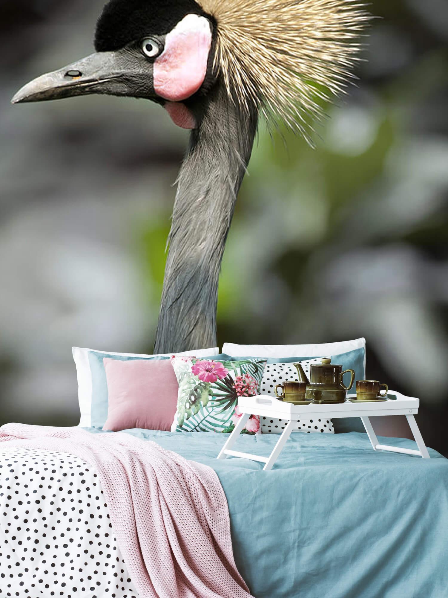 Kraanvogel close-up 2