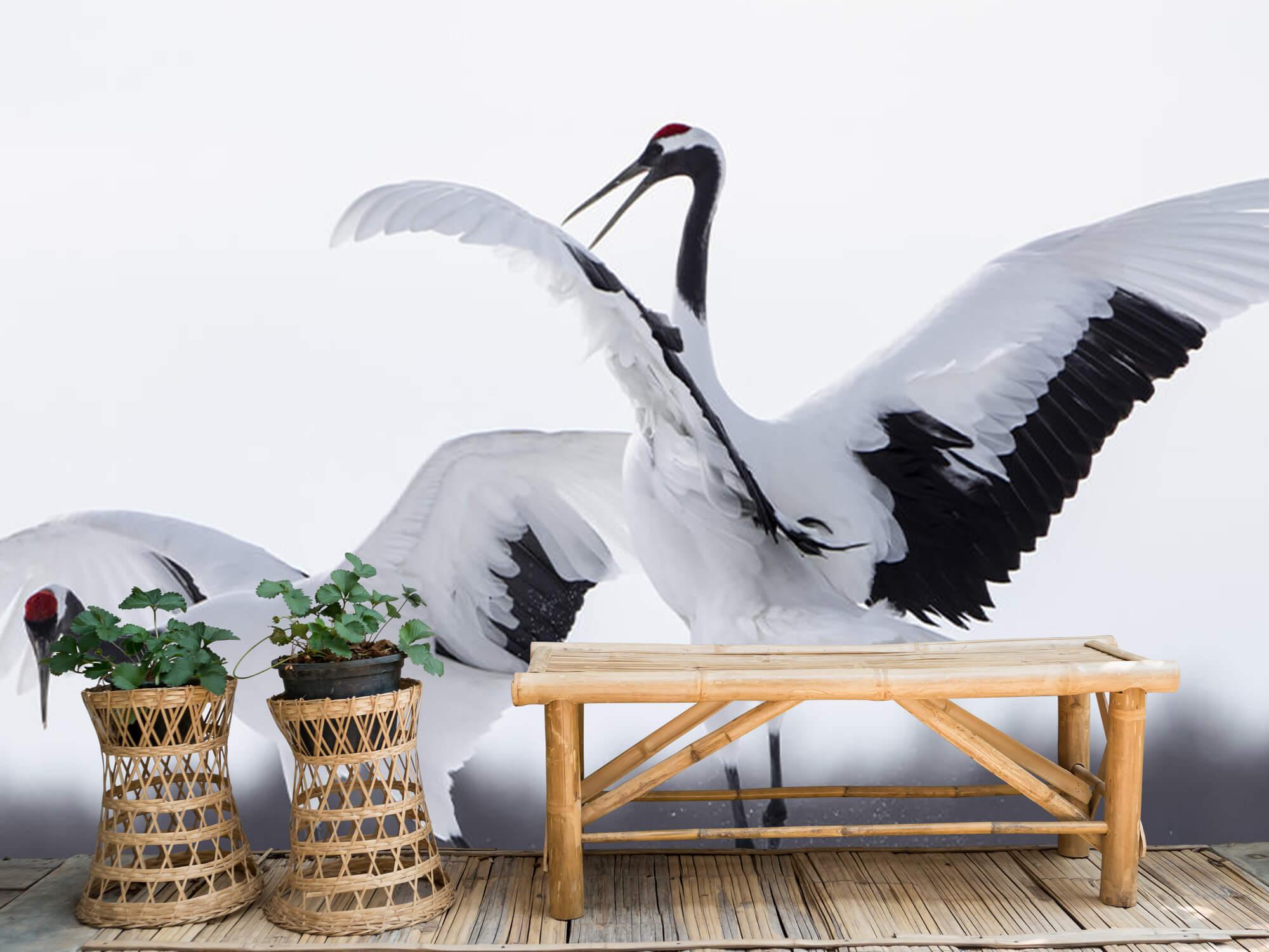 Spelende kraanvogels 2