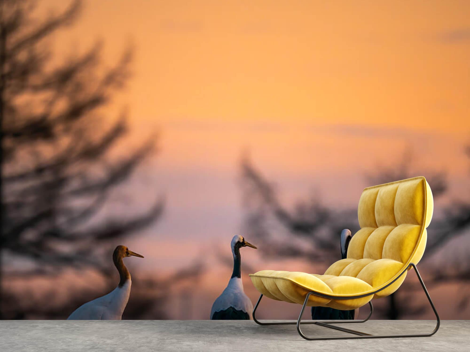 Kraanvogels bij zonsondergang 9