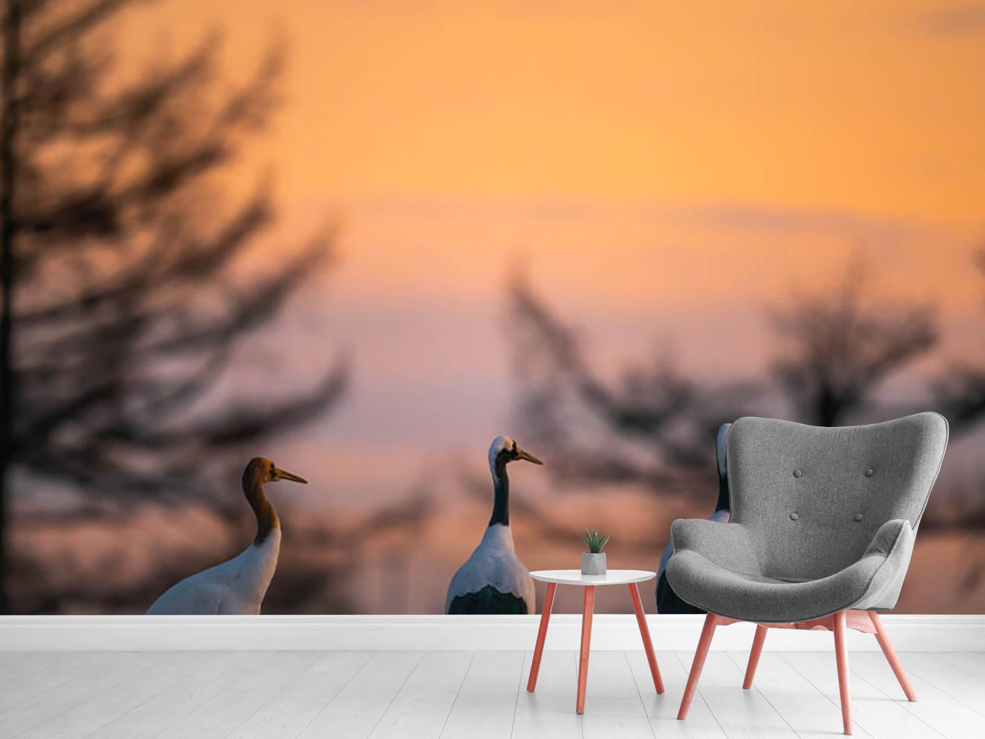 Kraanvogels bij zonsondergang 5