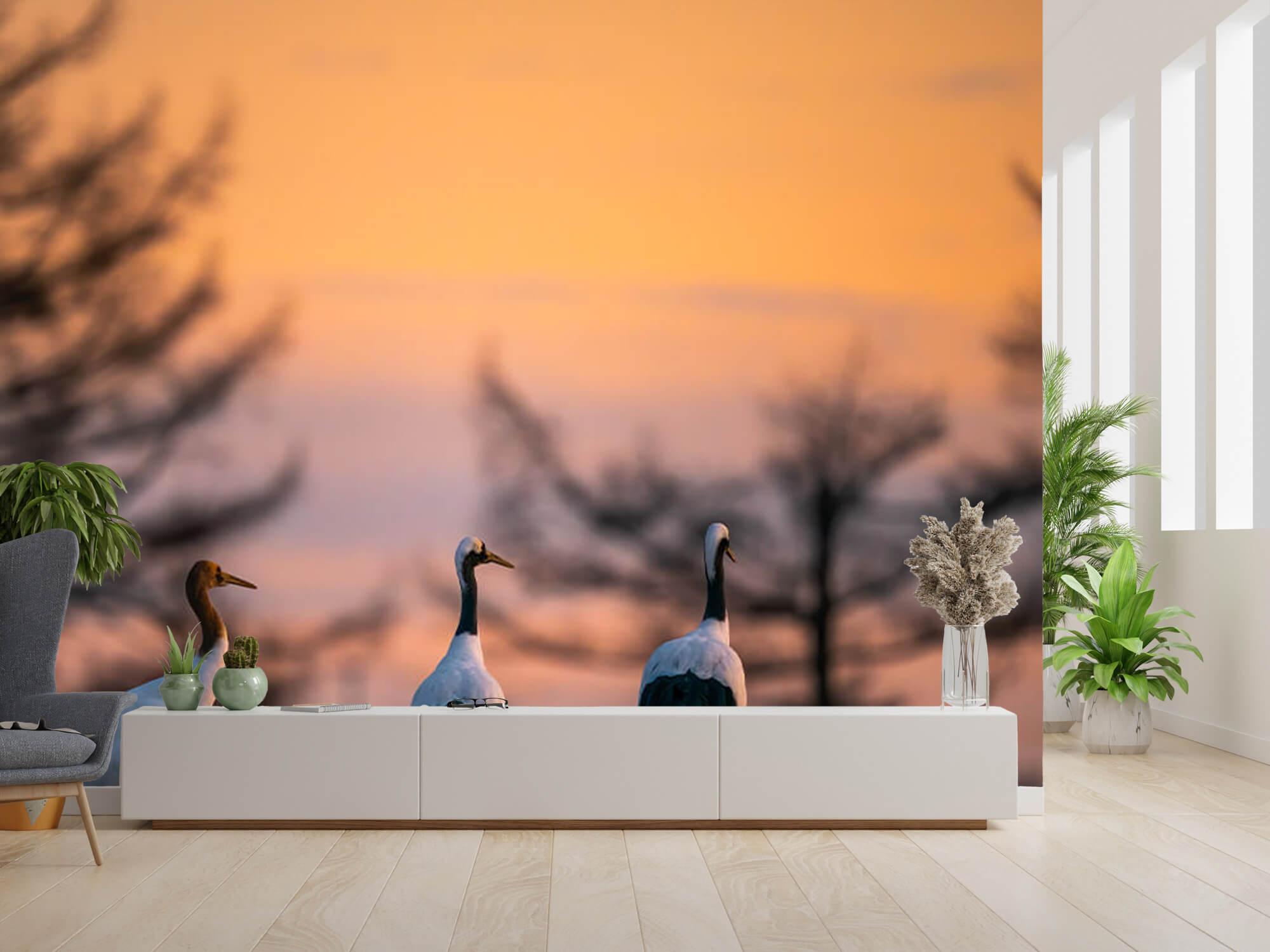 Kraanvogels bij zonsondergang 2