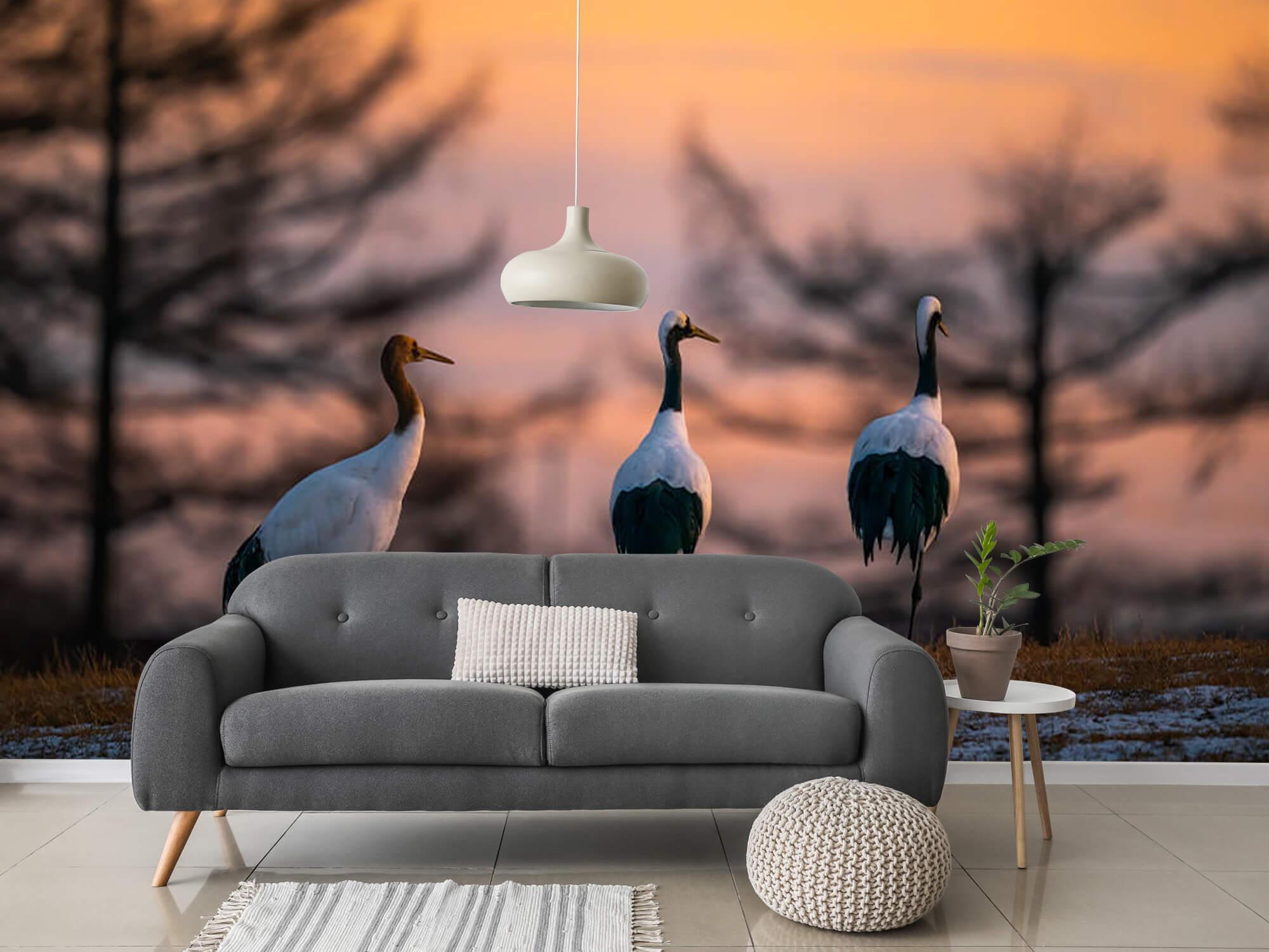 Kraanvogels bij zonsondergang 1