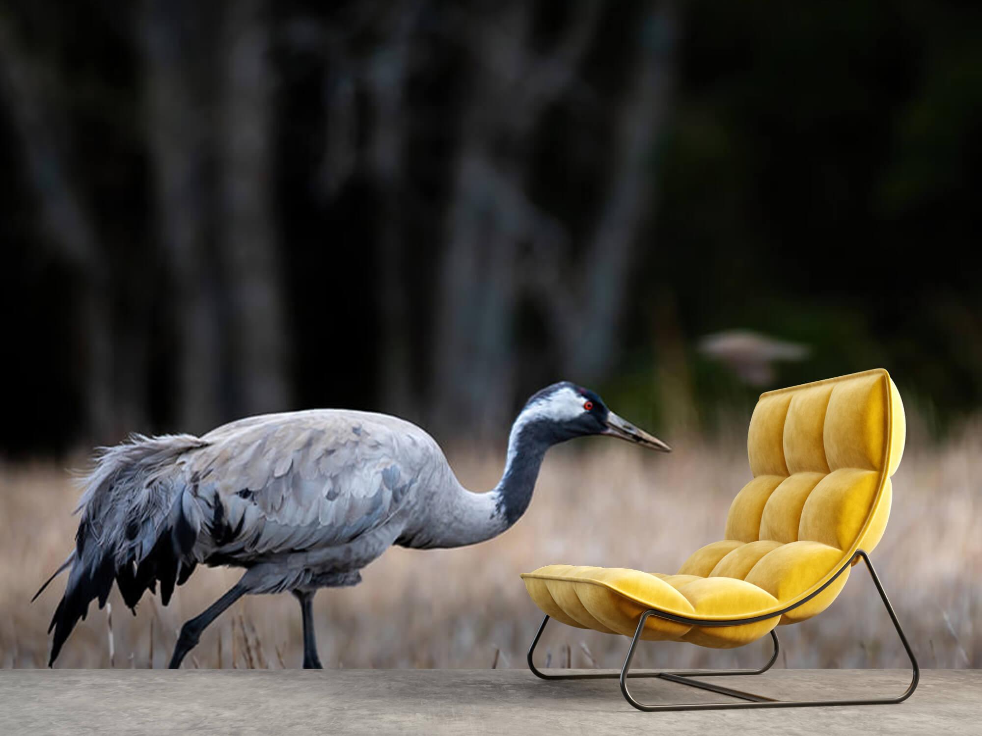 Lopende kraanvogel 8